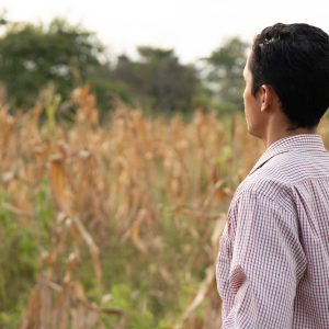 Landwirt vor Maisfeld Südamerika