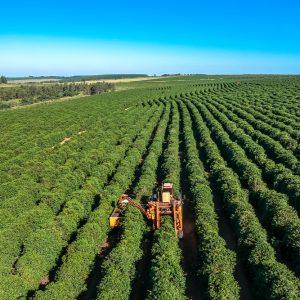 Erntemaschine in Kaffeeplantage Brasilien